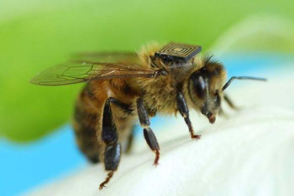 Bee sensor network
